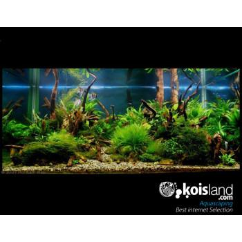 Aquascaping - mejores acuarios pantados