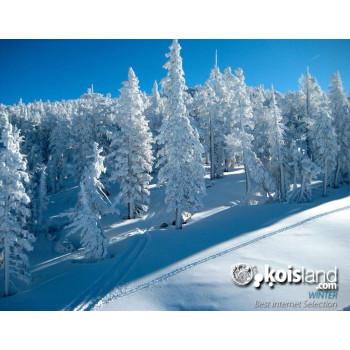 Invierno koi koisland