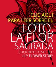 Loto - La Flor sagrada