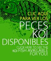 Peces Koi disponibles