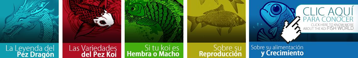 Conoce más sobre los peces koi haciendo clic aquí