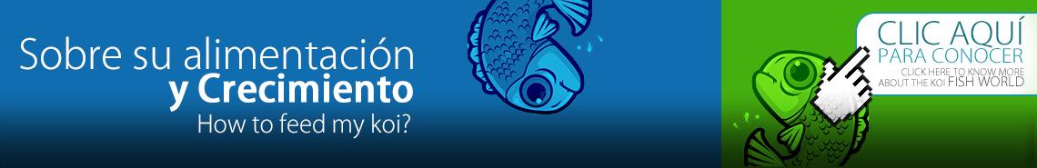 Como alimentar a mis peces koi