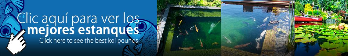 Galería mejores estanques y jardines