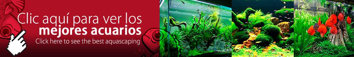 Galería Aquascaping - Mejores acuarios plantados