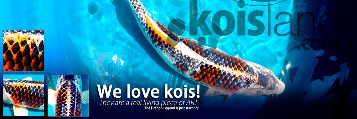 Variedades de los peces koi