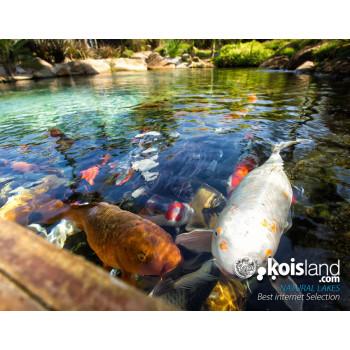 Koisland natural lakes
