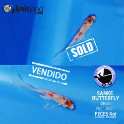 REF.2807 - Sanke Butterfly