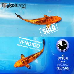 REF.2809 Ki Utsuri