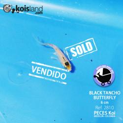 REF.2810 - Black Tancho Butterfly