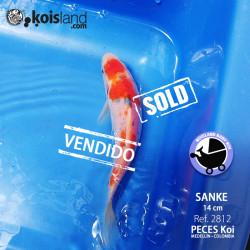 REF.2812 - Sanke