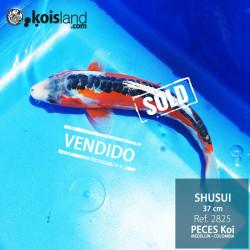 REF.2825 - Shusui MACHO
