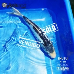 REF.2827 - Shusui