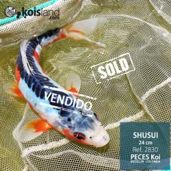 REF.2830 - Shusui