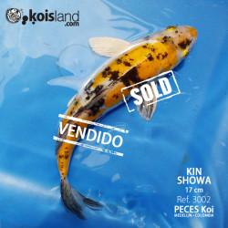 REF.3002 - KIN Showa 17cm