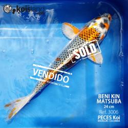 REF.3006 - Beni KIN Matsuba 24cm