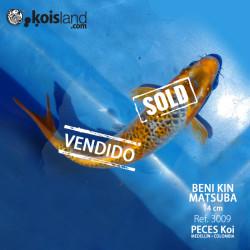 REF.3009 - Beni KIN Matsuba 14cm