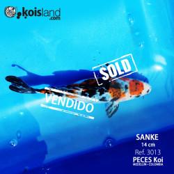 REF.3013 - Sanke 14cm