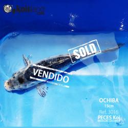 REF.3016 - Ochiba 15cm