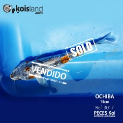 REF.3017 - Ochiba 15cm