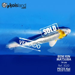 REF.3020 - Beni KIN Matsuba 14cm