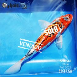 REF.3022 - SHUSUI 25cm