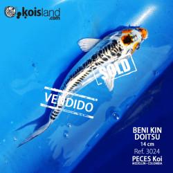 REF.3024 - Beni KIN Doitsu 14cm
