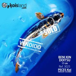 REF.3025 - Beni KIN Doitsu 17cm