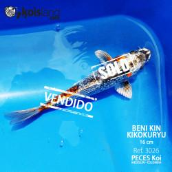 REF.3026 - Beni KIN Kikokuryu 16cm