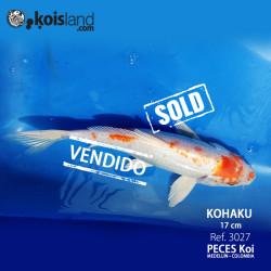 REF.3027 - Kohaku 17cm