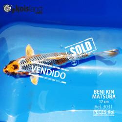 REF.3031 - Beni KIN Matsuba 17cm