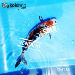 REF.3032 - Sanke 14cm