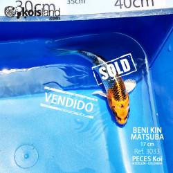 REF.3033 - Beni KIN Matsuba 17cm