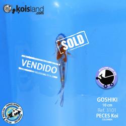 REF.3101 - Goshiki