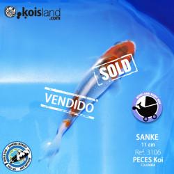 REF.3106 - Sanke