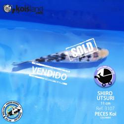 REF.3107 - Shiro Utsuri