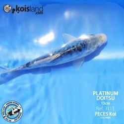 REF.3111 - PLATINUM Doitsu 15cm