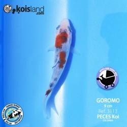 REF.3113 - Goromo