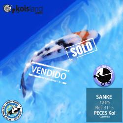 REF.3115 - Sanke 13cm
