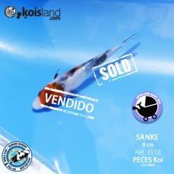 REF.3118 - Sanke