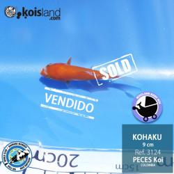 REF.3124 - Kohaku 9cm