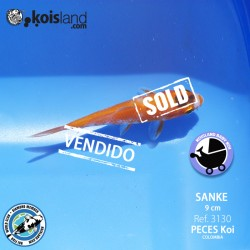 REF.3130 - Sanke 9cm