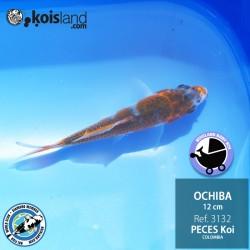REF.3132 - Ochiba 12cm