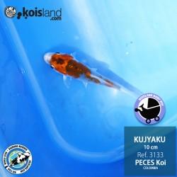 REF.3133 - Kujyaku