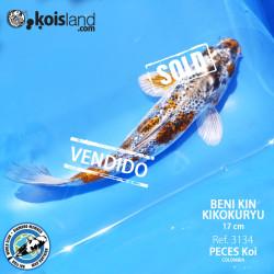 REF.3134 - Beni KIN Kikokuryu 17cm