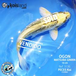 REF.3136 - Ogon Matsuba Ginrin 16cm