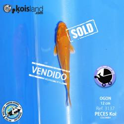 REF.3137 - Ogon 12cm