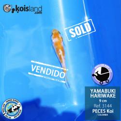 REF.3144 - Yamabuki Hariwake 9cm