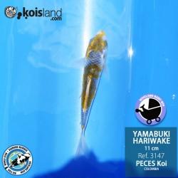 REF.3147 - Yamabuki Hariwake 11cm