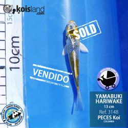 REF.3148 - Yamabuki Hariwake 13cm