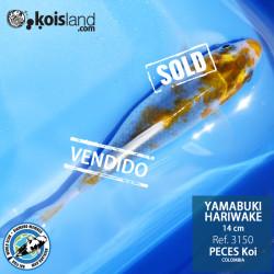 REF.3150 - Yamabuki Hariwake 14cm